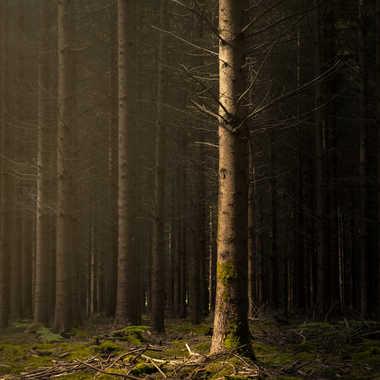 Forêt enchantée (L'arbre) par MiK5370
