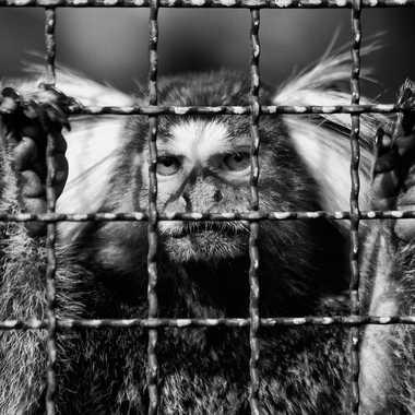 Prison par Isabellefalconnet