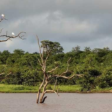 Point d'eau au cœur du bush africain par patrick69220