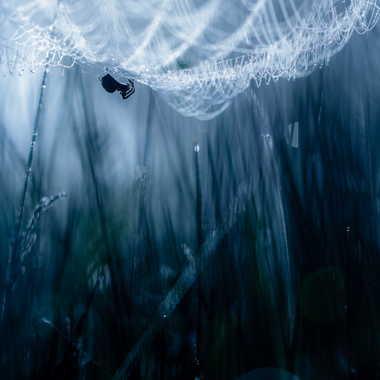 Spiderwoman par Emmanuel Graindépice