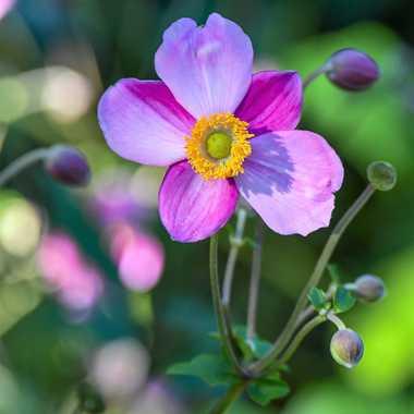 Fleurs sauvage par Dida