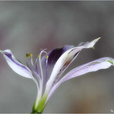 essai fleur2 par genevieve_3824