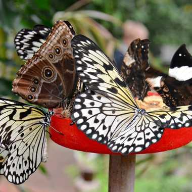 Bouquet de Papillons par mamichat