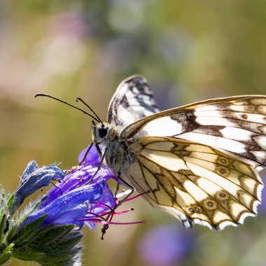 Papillon par jean-Luc