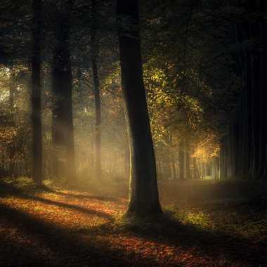 Magic tree par MiK5370