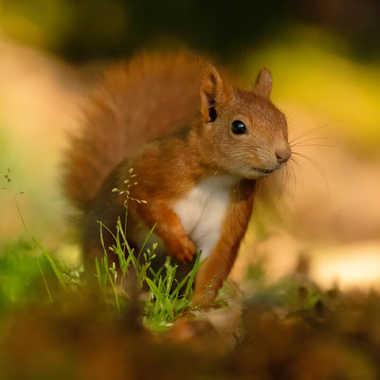 ecureuil par Fafa