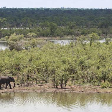 Terre inondée de Mopani par patrick69220