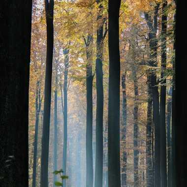 Promenons-nous dans les bois ... par quechouan