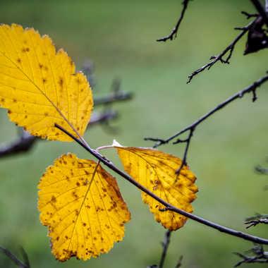 C'est l'automne #2 par Philoupi