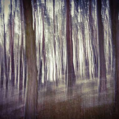 Arbres fantômes par Lolo Zikgyver
