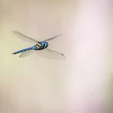 In the air... par Franck06