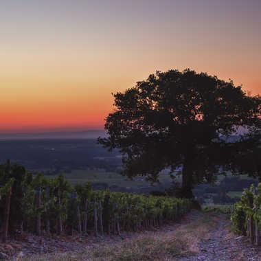 Le chêne de la colline. par patrick69220
