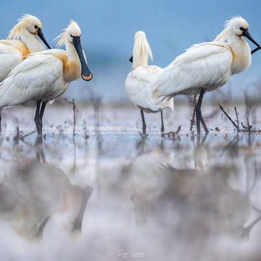 dans le silence de l'étang par Regis Parrens