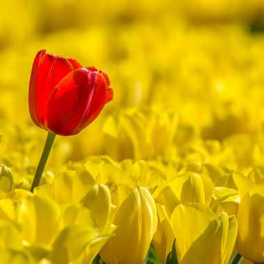 Au milieu des jaunes par Dav.sv
