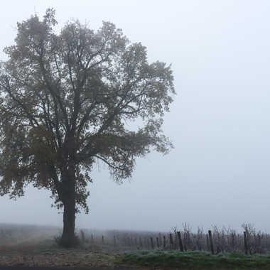 Le brouillard du matin par patrick69220
