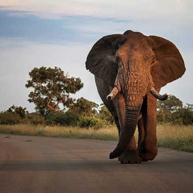 Sur les routes du Kruger par patrick69220