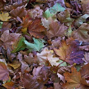 feuilles mortes à ramasser à la pelle par LABADIE