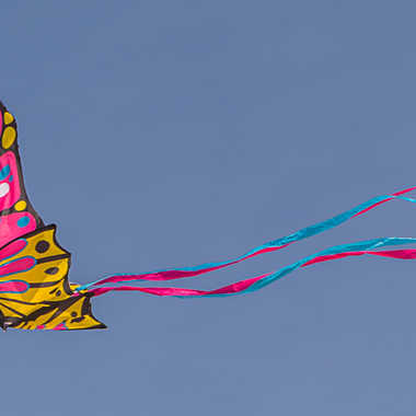 Vite, vite 4 ... Papillum vulgarus  par Basile59