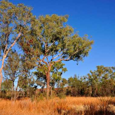 Le bush australien par rmgelpi