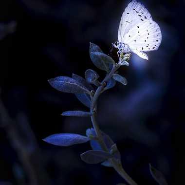 Lumière Ephémère ... par FredoRoiDuVelo