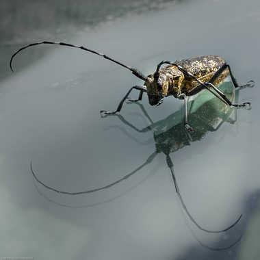 Coléoptère - Cerambycidae par cbiget.leschabottes@gmail.com