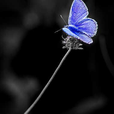 Just  blue  par FredoRoiDuVelo