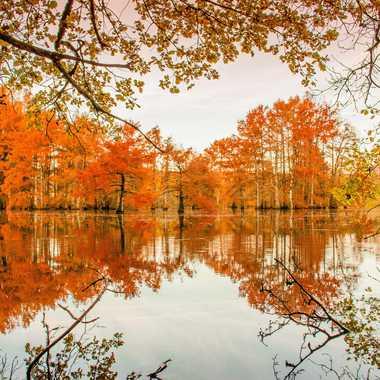 Couleurs d automne  par brj01