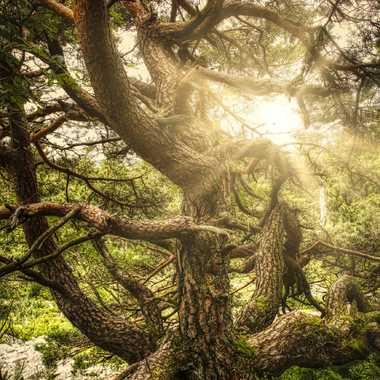 Gorgone des bois. par FloRd