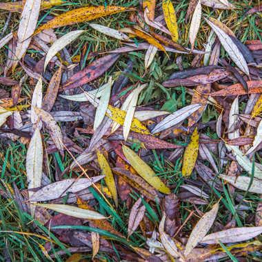 Texture feuilles par ChrisO7