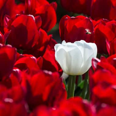 Petit bouquet pour mesdames.... par Dav.sv
