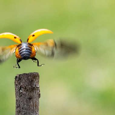 Bumblebee par greg_cmwa