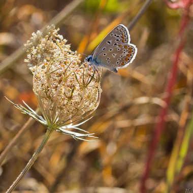 Joli papillon par jean-Luc