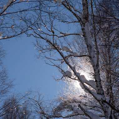 traces de neige par ROGER46