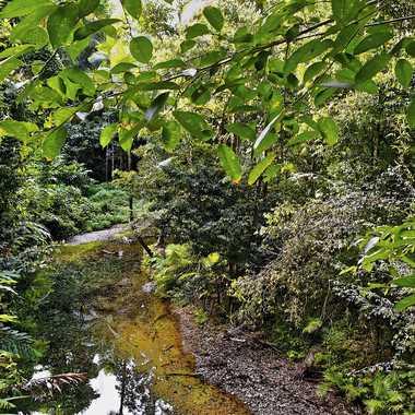 Reflets dans la forêt tropicale par rmgelpi