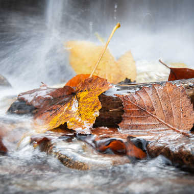 Feuilles d'automne emportées par le courant par Fildar
