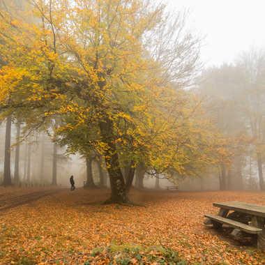 automne par cristgal56