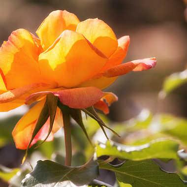 Reine du Jardin par patrick69220
