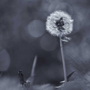 La   mauvaise herbe  du photographe. par patrick69220