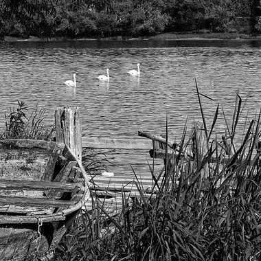 La Saône à Belleville par patrick69220