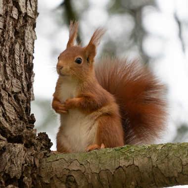 Un écureuil par SophieDel