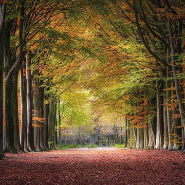 Toutes les couleurs de l'automne... par marc_1328