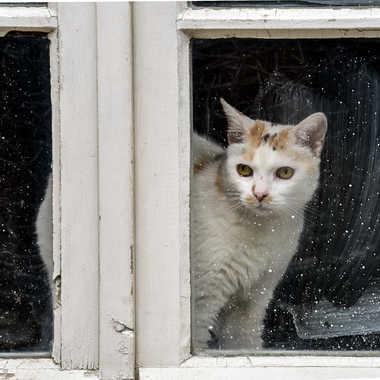 De la Fenêtre .. par Buissem