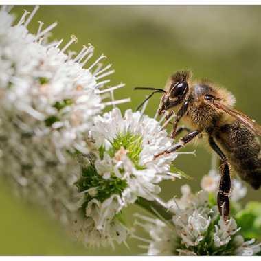 Maya l'abeille par Fioenz