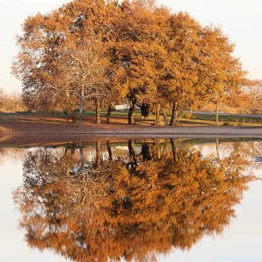 Reflet d'automne par LAGASSAN_h
