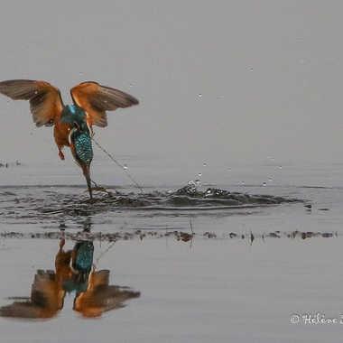 le Plongeon du Martin pêcheur par LAGASSAN_h