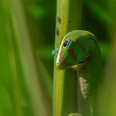 vert sur vert par dolan