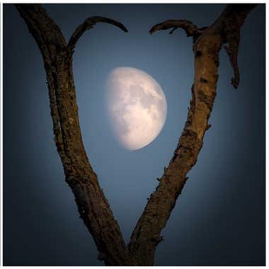 Triptyque : la branche et la lune par Yaccopro