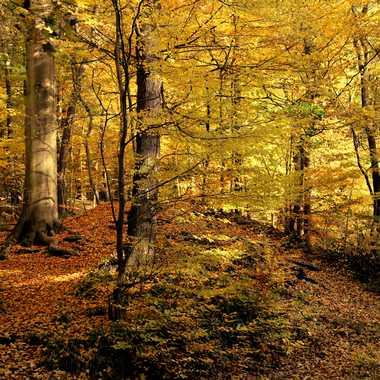 sous-bois d'automne par bleu