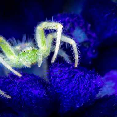 Very very little spider par FredoRoiDuVelo