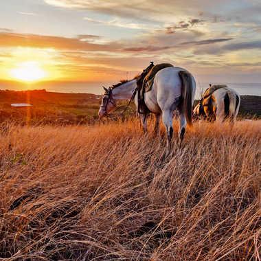 Coucher de soleil à cheval par Matt_974